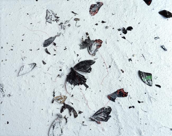 papillons10