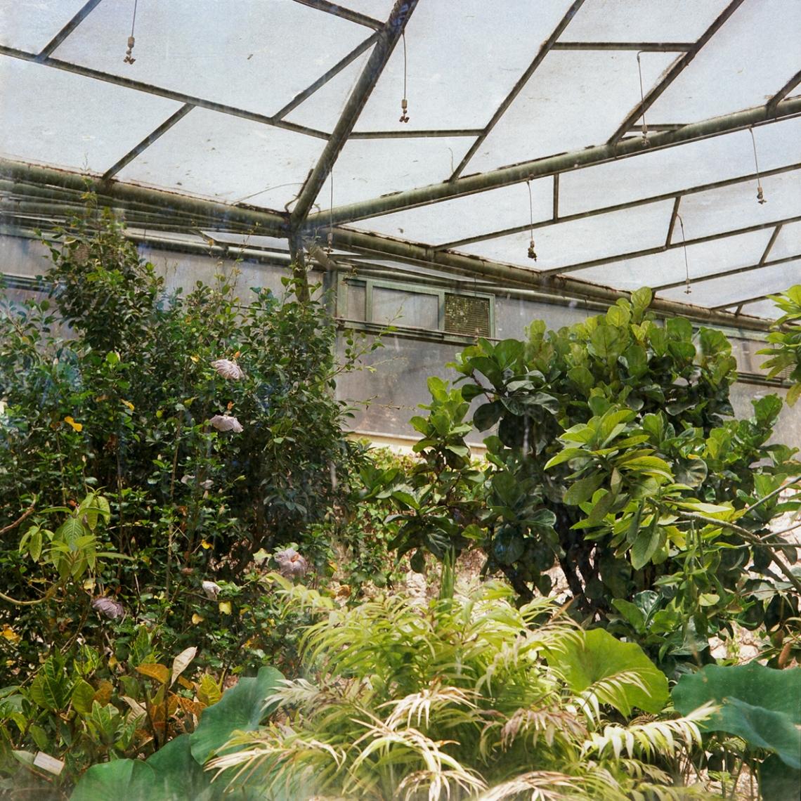 jardinBotaniqueGalerienomade004