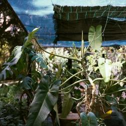 jardinBotaniqueGalerienomade018