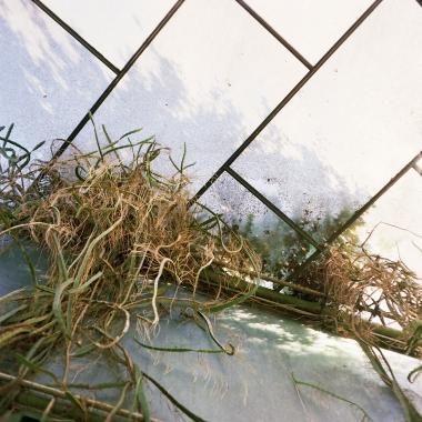 jardinBotaniqueGalerienomade019
