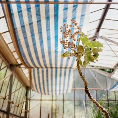 jardinBotaniqueGalerienomade020