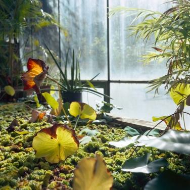 jardinBotaniqueGalerienomade021